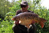 A beautiful 24lb 8oz chunky scaley mirror in the sunshine